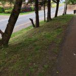 Holmhills grass 1