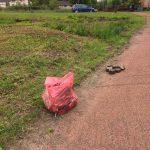 Holmhills grass 2