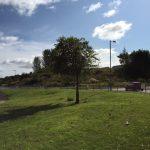 Langlea tree3