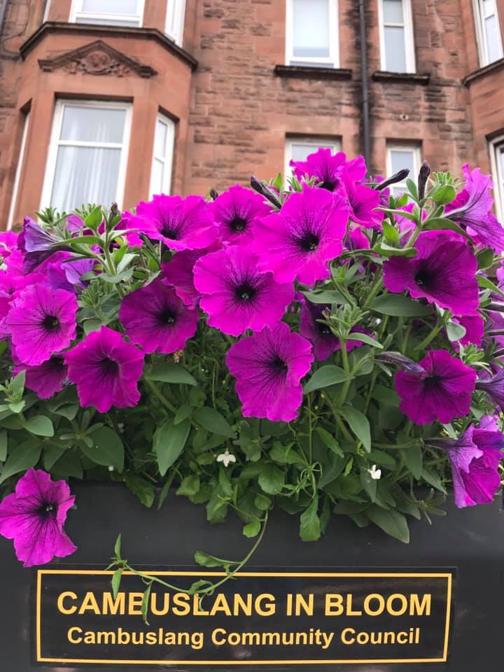 Please help to fundraise for Cambuslang in Bloom
