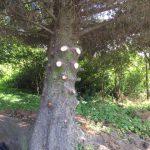 Langlea tree